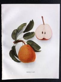 Hedrick - Pears of New York 1921 Fruit Print. Frederick Clapp.